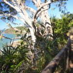 Coastal path in Noosa National Park - Coast to Hinterland Tours