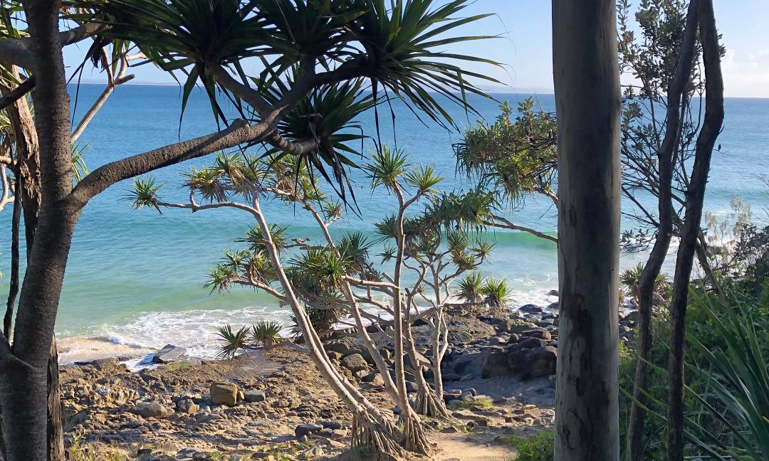 Noosa in a Day Tour, Coast to Hinterland Tours Sunshine Coast. Coast to Hinterland Tours