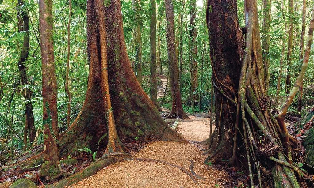 Rainforest, View & Montville Day Tour