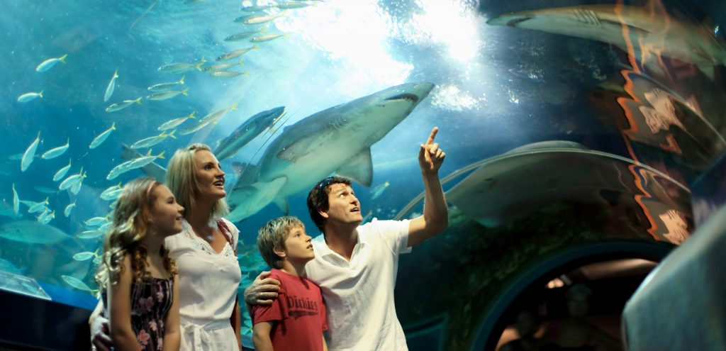 Sealife Mooloolaba, Attractions Sunshine Coast
