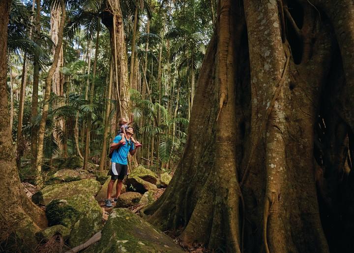Mary Cairnecross Rainforest Reserve Day Tour Sunshine Coast